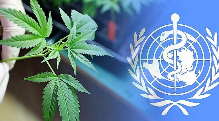 Cannabis - OMS