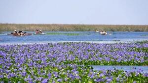Una travesía en kayak por los Esteros del Iberá